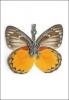 grossiste destockage  bijoux-accessoires Bijoux insectes